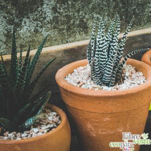 gravier blanc cactus pot