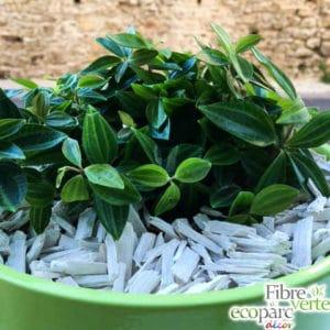 copeaux blanc plante verte