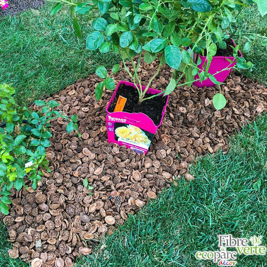 coque de noix jardin