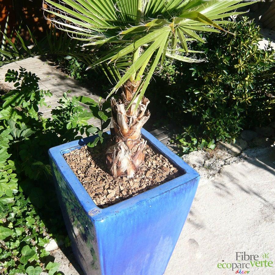 mulch de coco en pot